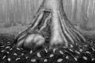 tree in bog