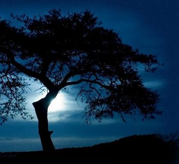 black tree against an indigo sky