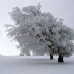 In Winter When