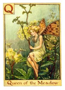 Q-Queen of the Meadow
