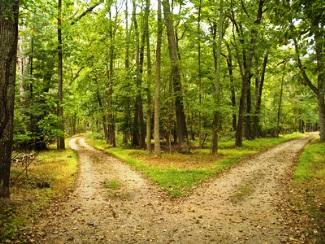 crossroads in woods