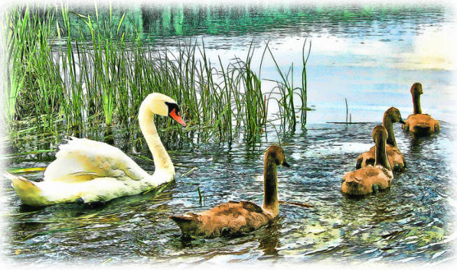 """Spring Ducklings"" by Tom Schmidt, watercolor, 2012"